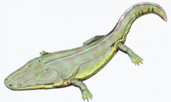 Picture of Greenland's largest amphibian fossil