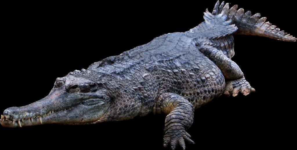 Paleontólogos da NOVA entre os investigadores portugueses que descobriram o mais antigo crocodilo fóssil conhecido