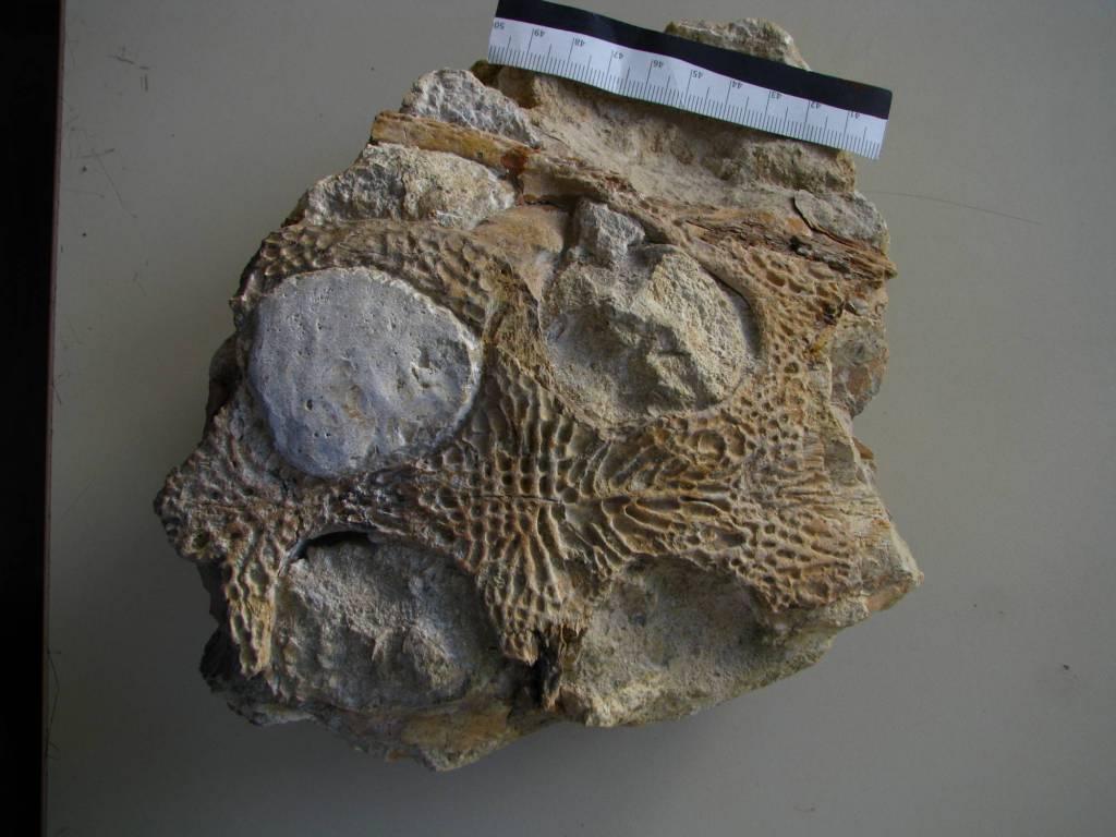 Portugalosuchus azenhae