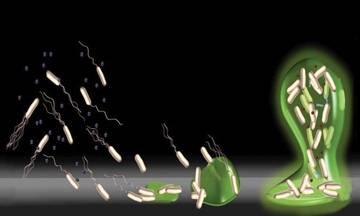 imagem ilustrativa da investigação do ITQB NOVA sobre o mecanismo de formação de biofilmes em bactérias