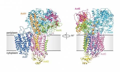 Respiração Bactéria ITQB