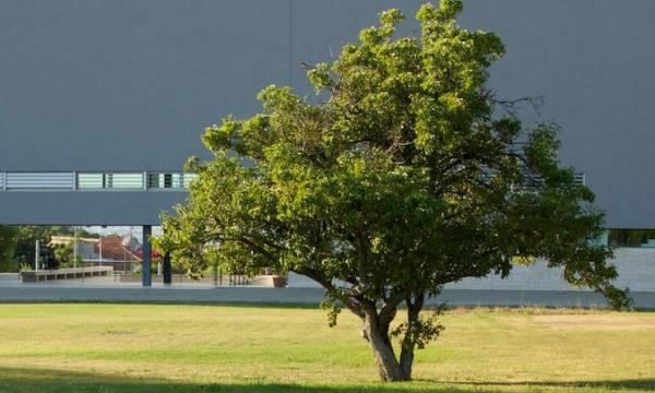 Dia internacional da árvore